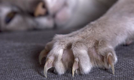 Cats: pro-declawing or anti- declawing?