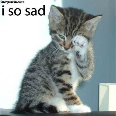 Which cat is saddest?