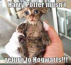 OMG that kitty is like a mini Dobby!
