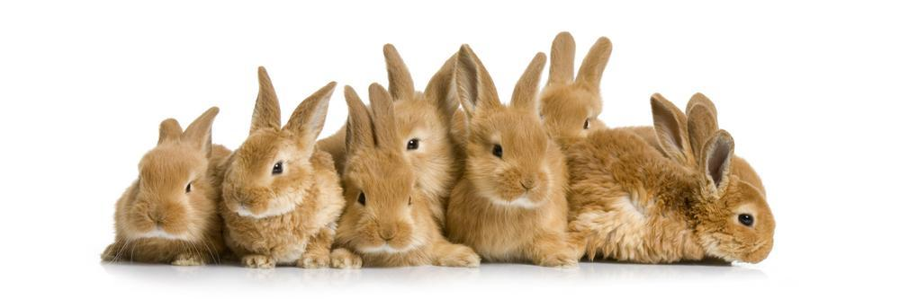group 'o' bunnies