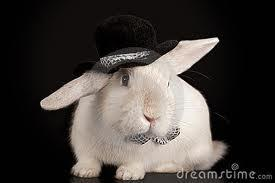 Top hat bunny!