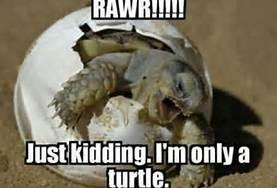 Scary Turtle