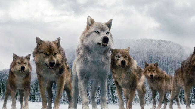 Be raised by a pack of wolves
