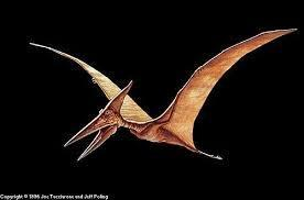 Pterodactyl! Flying is awesome!