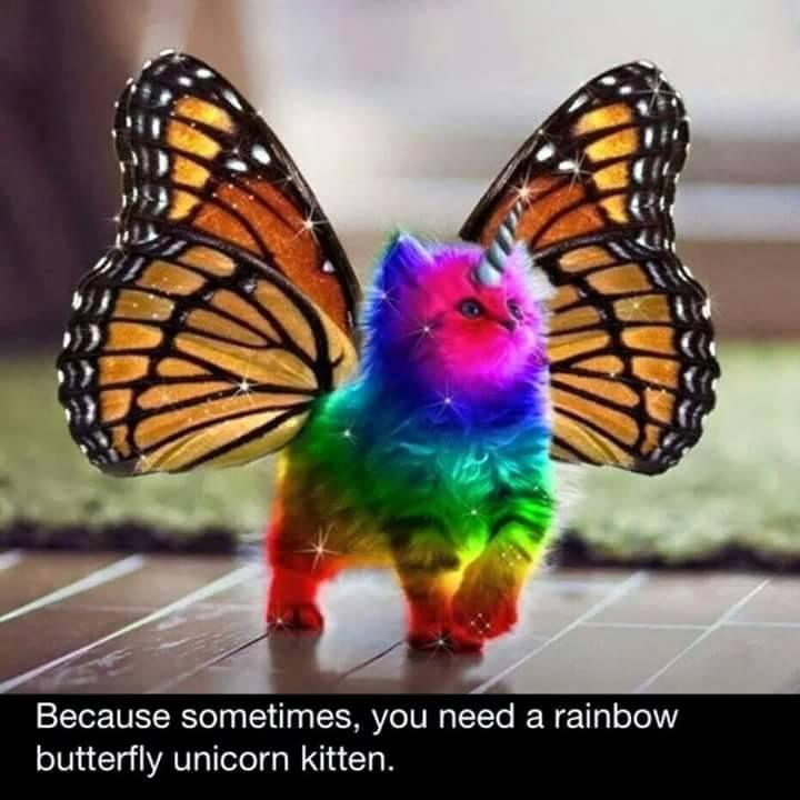 Rainbow unicorn butterfly kitten! 😝