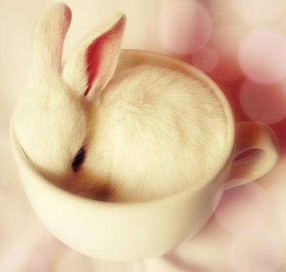 Bunny in a tea cup!