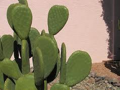 Me is a smooth cactus yay smooth!