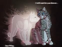 jayfeather and halfmoon