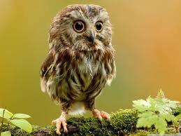 This owl!