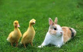 chicks and bunnies