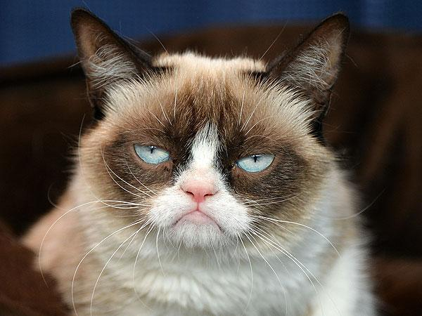 Be the coolest person in the world but be ugly(like grumpy cat)