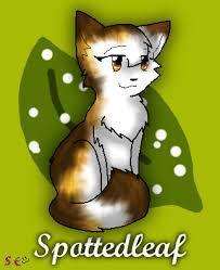 Spottedleaf! She's soo pretty and she was the first medicine cat we were introduced to!