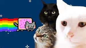 Real Cats Cover- Nyan cat