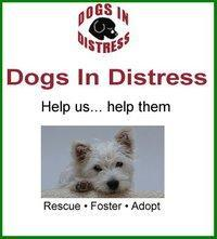 Dogs in Distress | Facebook