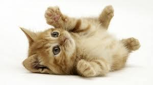 How much do you know about domestic cats!
