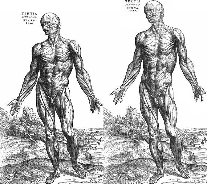 Basic Human Anatomy Quiz Scored Quiz