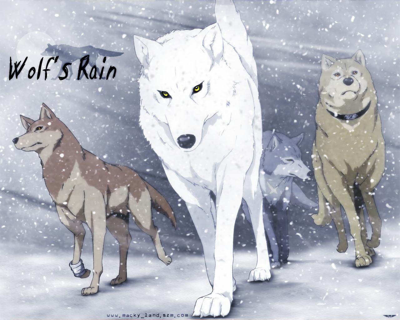 Wolf's rain, which wolf are you?