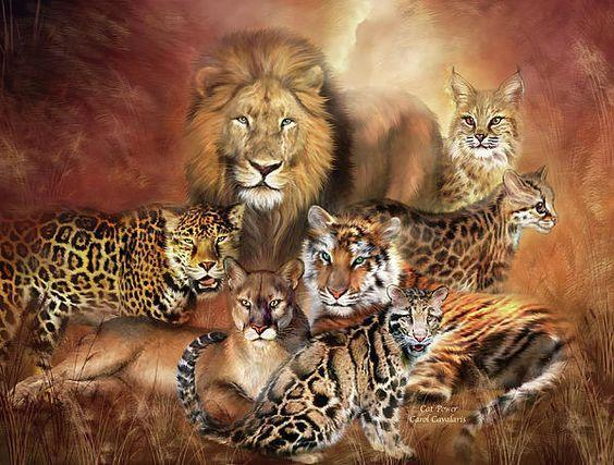 Which big cat are you? (1)