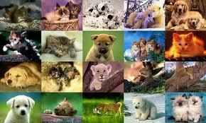 What kind of animal are you? (1)