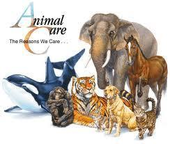 What type of animal are you? (1)