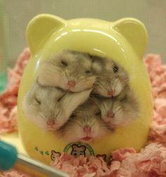 Which one of my hamsters are YOU?  :3