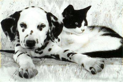 how well do you know the breed? - Dalmatian
