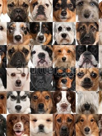 What dog are you? (5)