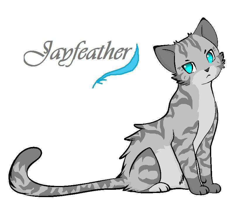 Do you know Jayfeather?