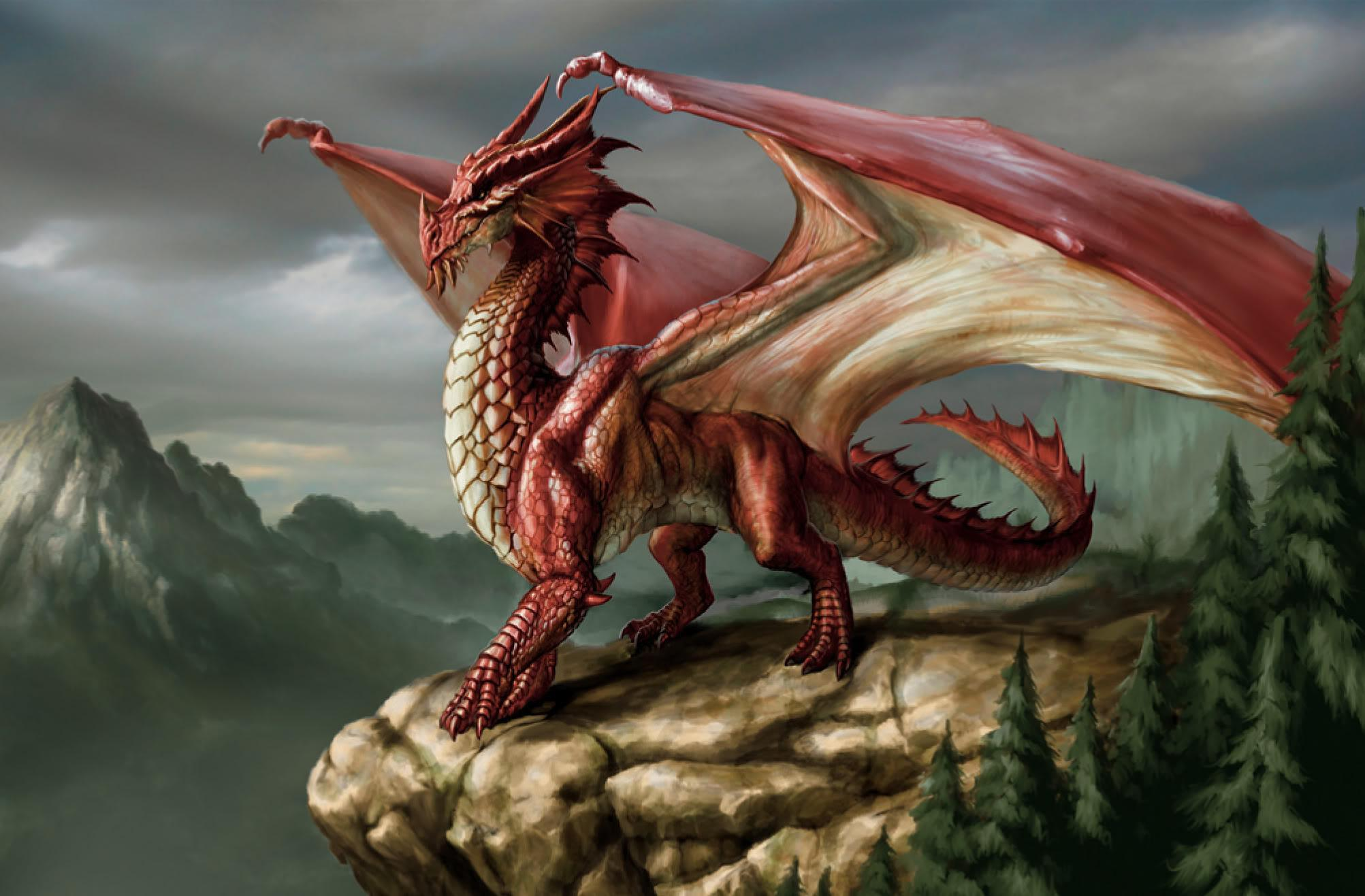 the DRAGON quiz (1)