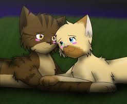 Warrior cats What Tigerstar and Shasha cat are you?
