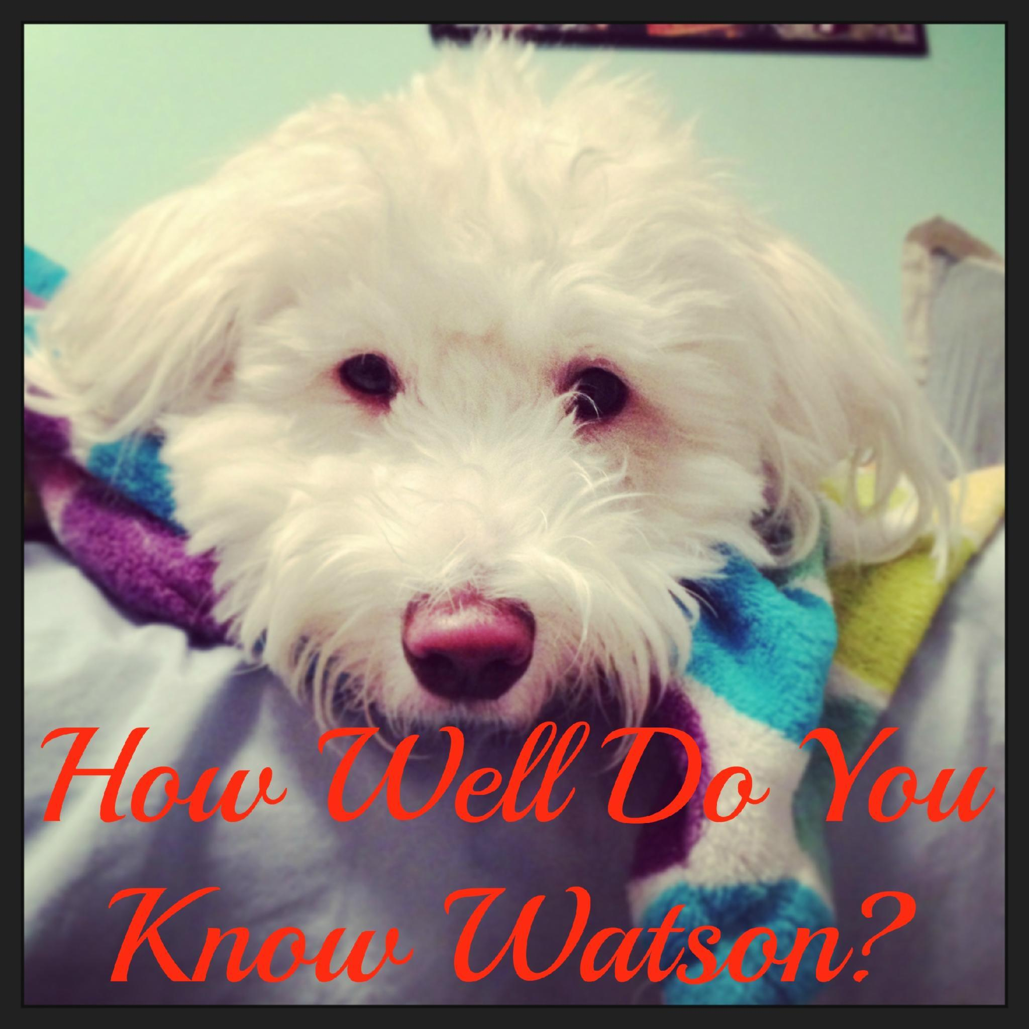 Do You Really Know Watson?