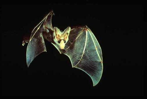 What kind of bat are you?