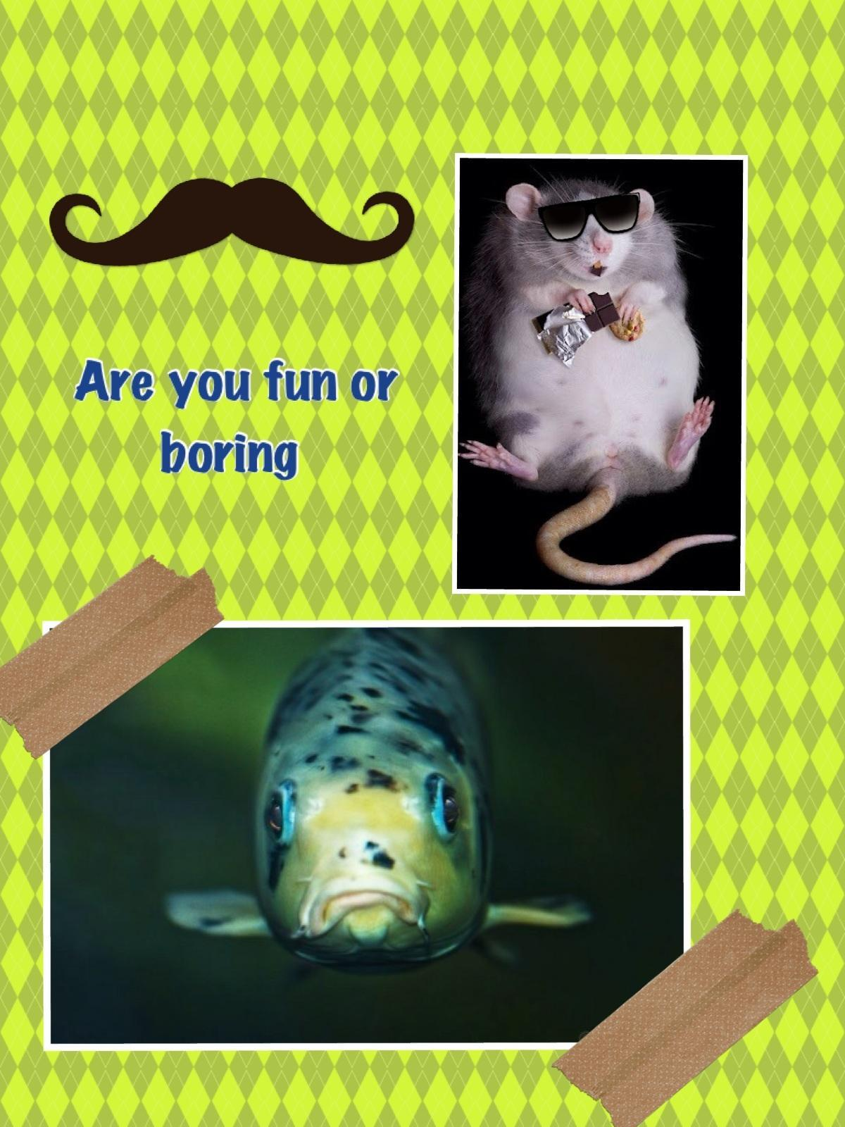 Are you fun or boring?