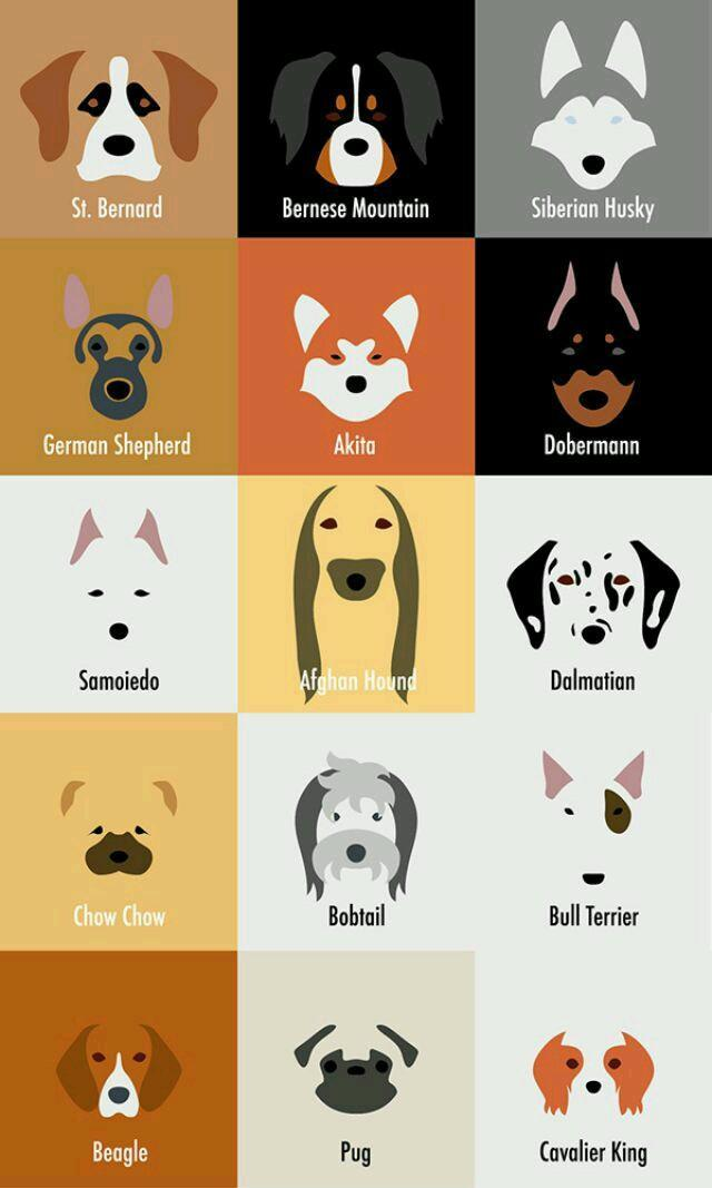 What dog breed are you most like? (1)