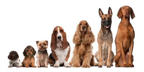 How Many Dog Breeds do you Know?