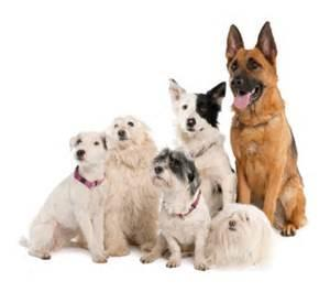 What Dog breed are you? (3)