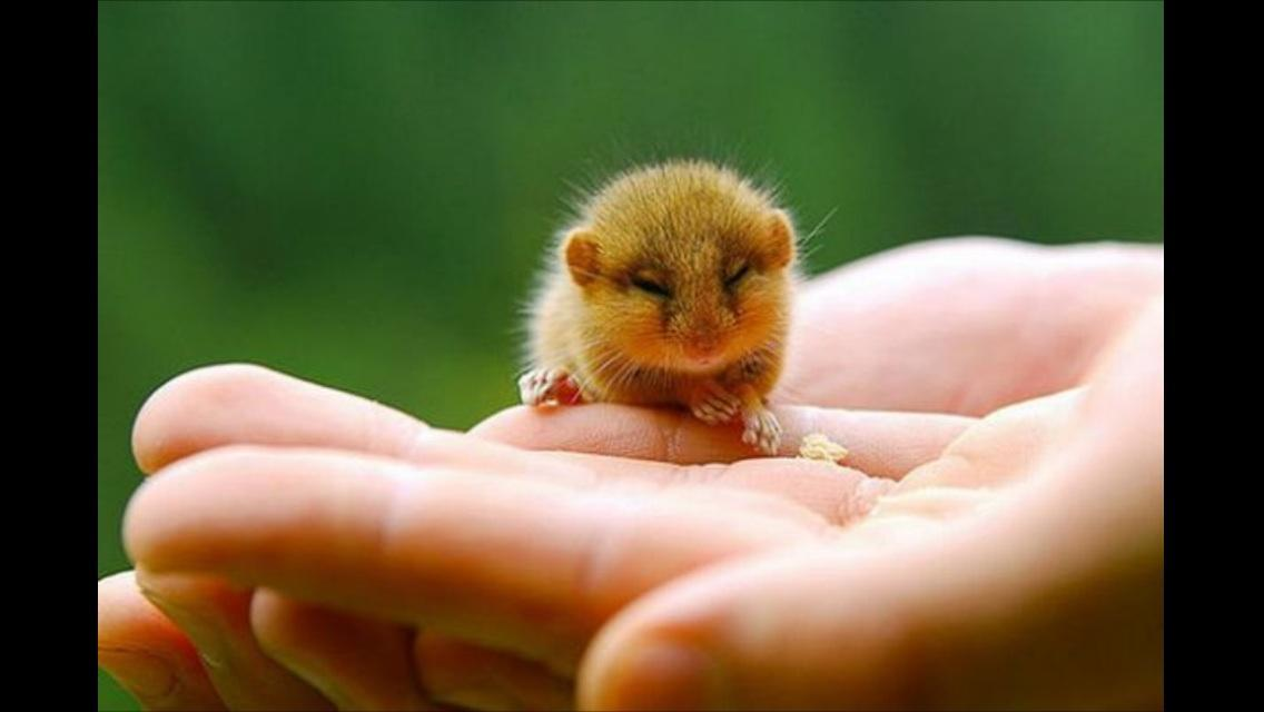 "Can these little animals make you saw ""AW!"""