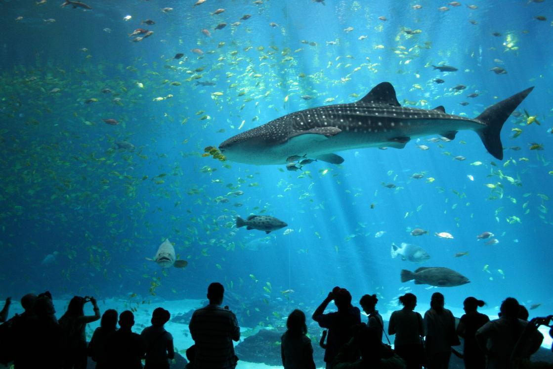 What would you be if you lived in an aquarium?