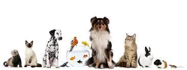 What pet fits your personality?