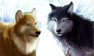 Are you a Day Wolf or Night Wolf?