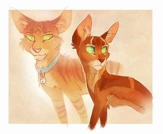 Are you a true warrior cats fan? (1)