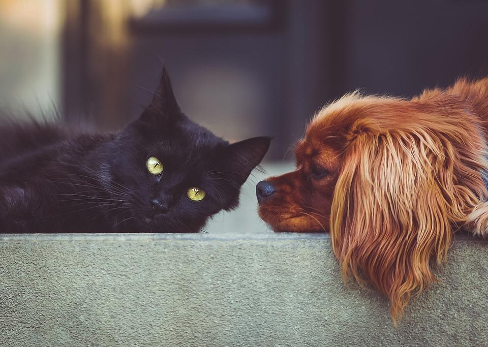 Are you a cat or a dog? (11)