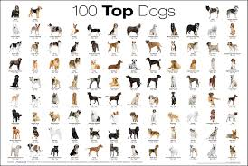 what dog breed are you? (4)