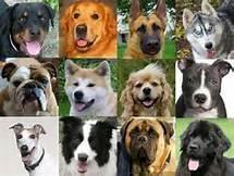 what dog breed are you? (7)