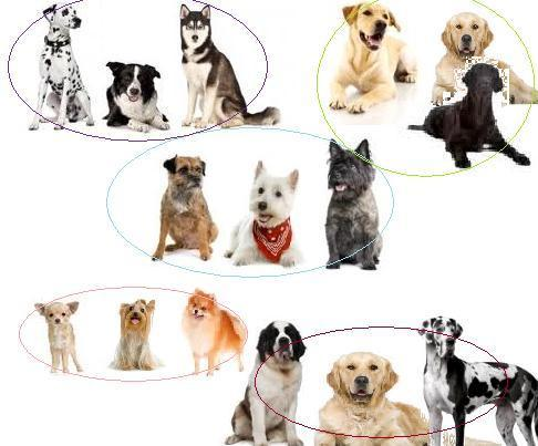 What type of dog is best for you?