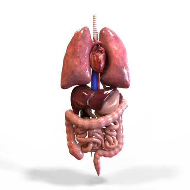 Tissues, Organs and Organ systems