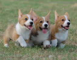 Can I make you aw over these cute dogs?