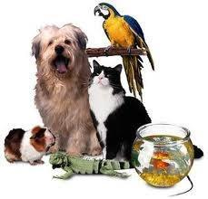 Are you a Dog, Cat, Guinea Pig or Bird?