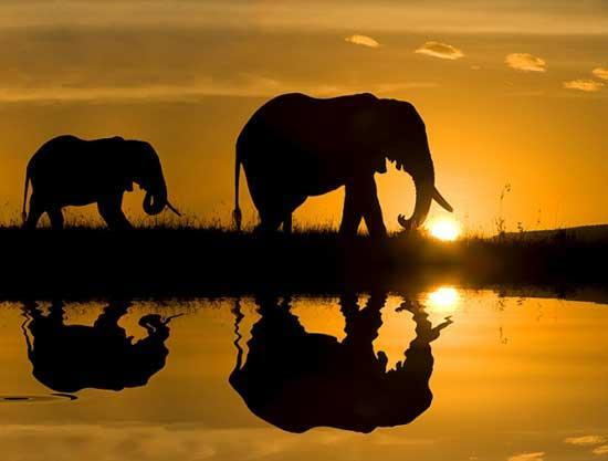 15 Interesting Facts about Africa