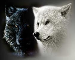 What wolf clan are you in?